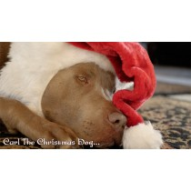 Strictly Country - Lacy J Dalton - Carl The Christmas Dog